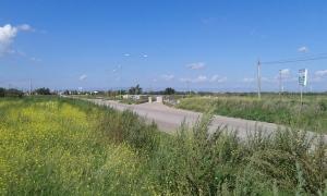 La Strada Provinciale 81 che collega Orta Nova a Carapelle
